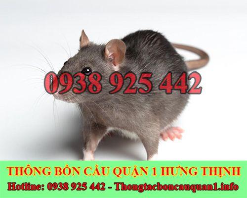 Chuột rơi xuống bồn cầu xử lý bằng 6 cách đơn giản